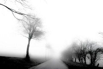 Balade dans le brouillard