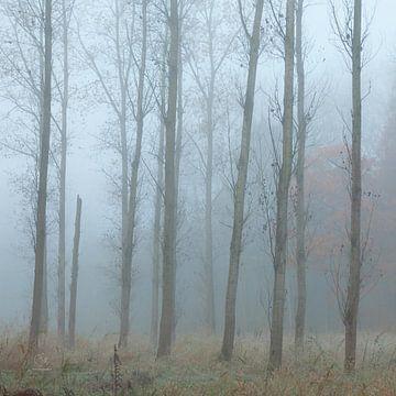 Bomen in de mist. sur