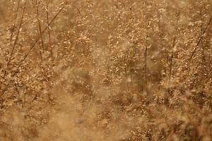 Een heel mooi graanveld.