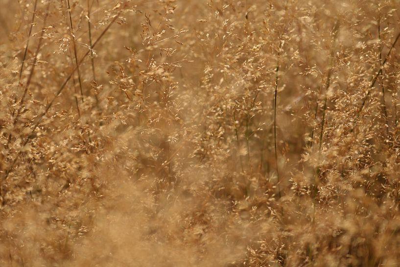 Een heel mooi graanveld. van Jeroen Beemsterboer