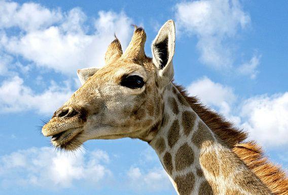 Jonge Giraffe in Namibië 2 van Jan van Reij