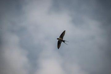 Een vliegende zwaluw van Kristian Oosterveen