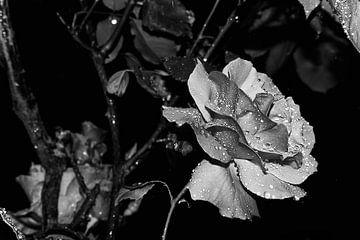 Rose im Regen von Marie-Claire Aling