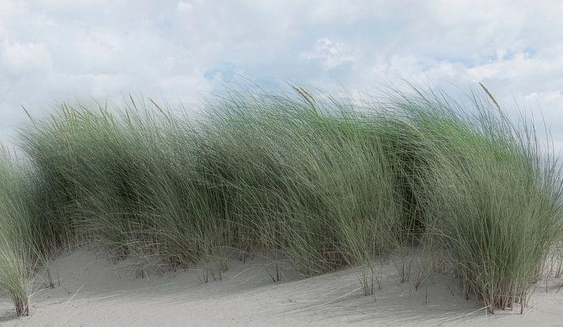 1182 Swaying dune grass van Adrien Hendrickx