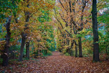 Herfstkleuren in het bos van Mario Brussé