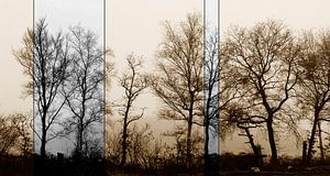 Oude bomen in moderne bewerking van André Mesker