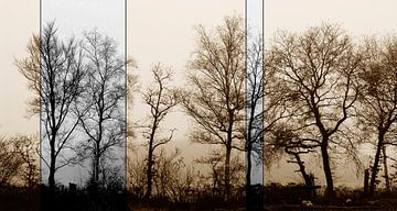 Oude bomen in moderne bewerking von André Mesker