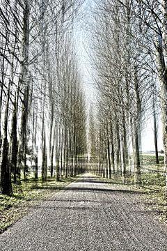Weg von David Pichler