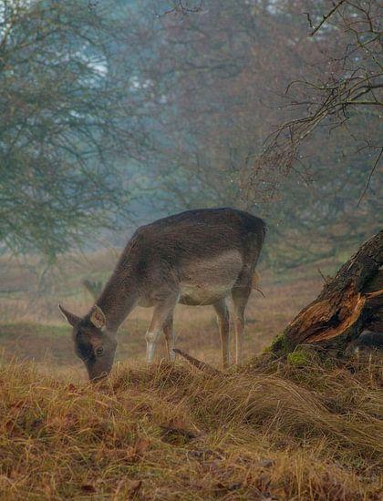 Hert in herfst van John ten Hoeve