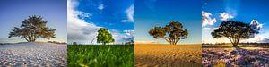 Vier seizoenen van Bart Verbrugge