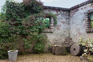 oude muur begroeid met planten
