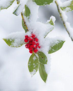 Rode bessen met een laagje sneeuw van Jos Pannekoek