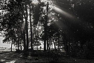 Mistig bos van Bjorn Brekelmans