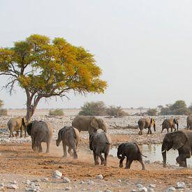 Olifanten parade langs de waterplek van Dexter Reijsmeijer