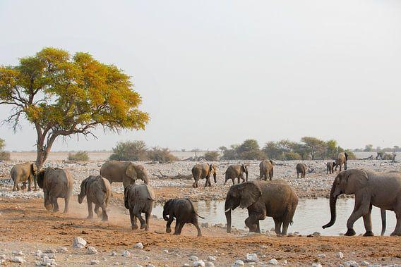 Olifanten parade langs de waterplek