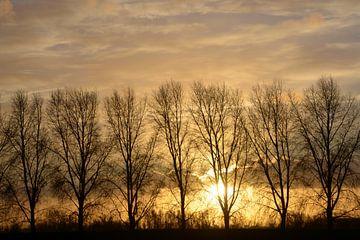 Untergehende Sonne hinter einer Baumreihe von A'da de Bruin