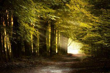 Light As The Breeze van Kees van Dongen