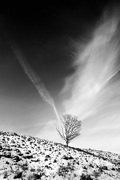 Solitaire boom 1 von Martijn van Huffelen