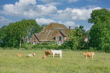 Idylle auf der Halbinsel Eiderstedt von Peter Eckert