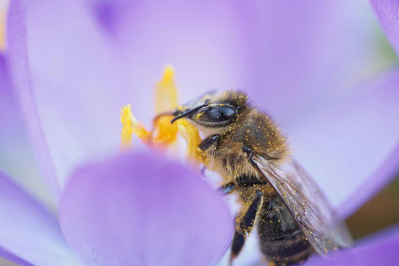 Verkostungsbiene von Astrid Brouwers