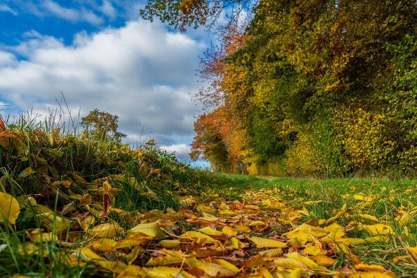 Prachtige herfstkleuren in Zuid-Limburg van John Kreukniet