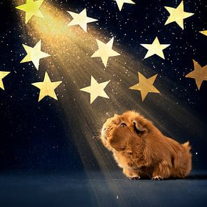 Guinea Pig Stargazing van