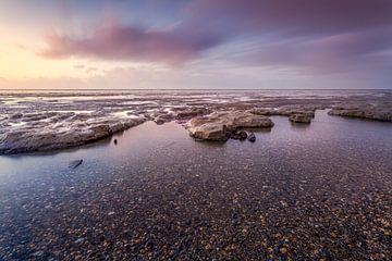 Muscheln und Schlick an der friesischen Wattenküste von Ton Drijfhamer