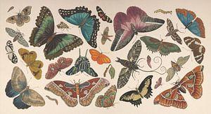 Vintage vlinder collage van antieke tekeningen van