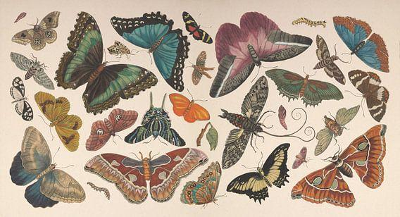 Vintage vlinder collage van antieke tekeningen