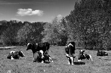 Koeien in een weiland van Leo Langen