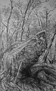 Zwart wit Australische bos