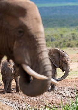 (Baby)olifanten van Jack Koning