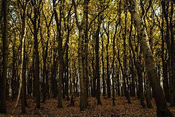 Alle Farben des Herbstes (Wasserversorgungsdünen) von Linsey Aandewiel-Marijnen