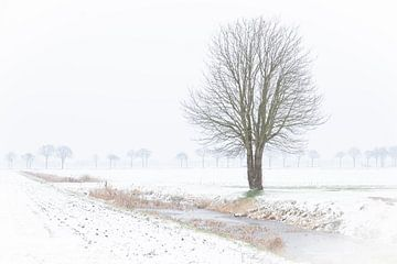 Eenzame boom in de sneeuw. van Anita Lammersma