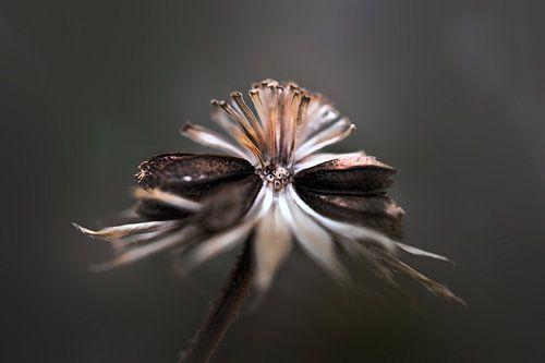 Symétrie florale van Martine Affre Eisenlohr