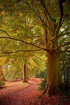 Oude bomen in de herfst van Jenco van Zalk
