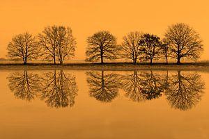 rij bomen spiegelt in het water van