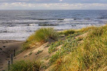 Plage et dunes hollandaises sur Dirk van Egmond