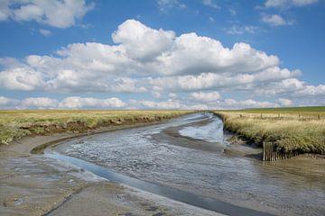 Zoutmoerassen in Noord-Friesland van Peter Eckert
