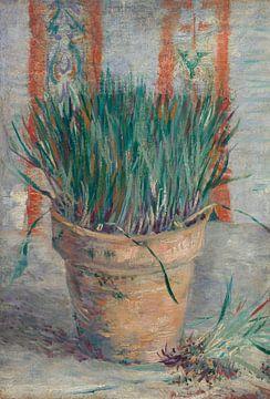 Blumentopf mit Schnittlauch, Vincent van Gogh