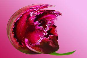 Abstracte Aubergine lila bloem