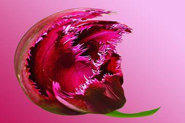 Abstracte Aubergine lila bloem van Alice Berkien-van Mil