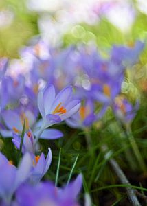 Impressionistisch voorjaar van