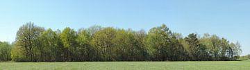 Panorama einer Waldgrenze von Wim vd Neut