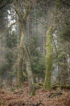 Mysterieuze foto, Hoekelumse bos van Elbertsen Fotografie