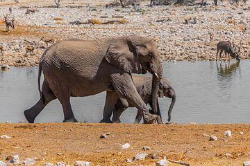 Elefanten van Felix Brönnimann