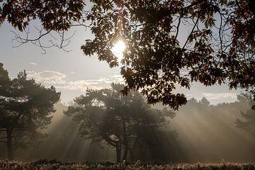 aufgehende Sonne im Wald von Frits Hogewoning