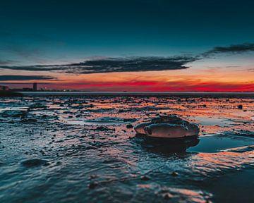 De Lichtgevende  kwal. van Wesley Kole