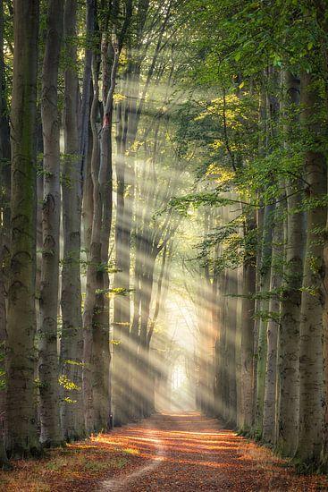 Zonnestralen in het bos van Edwin Mooijaart