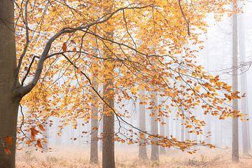 Herfst in mistig bos van Francis Dost